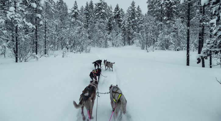 norway dog sledding