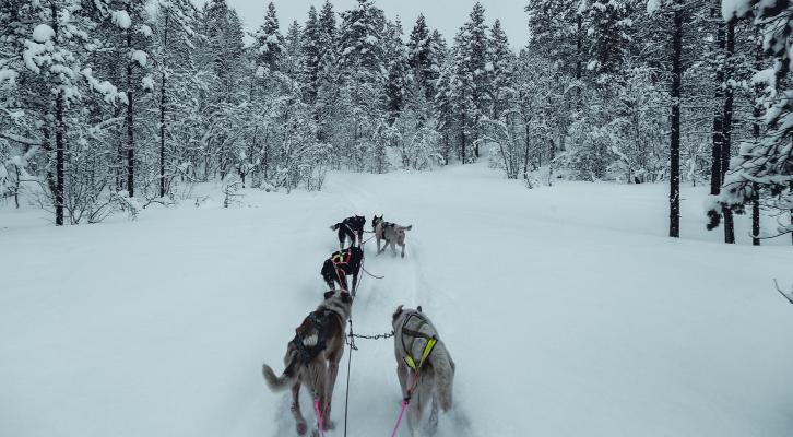 norway dog sledding