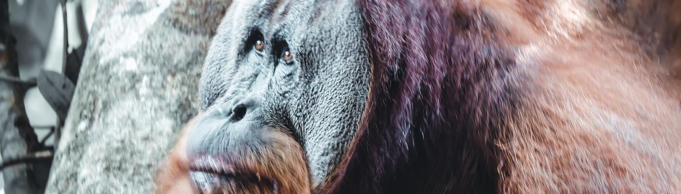 Sumatra Photography